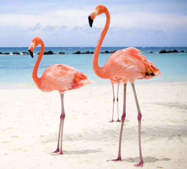 flamingos-e1487798613161.jpg?w=600&h=542